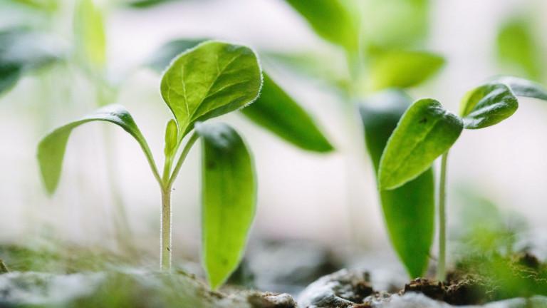 Een make over voor je tuin met direct resultaat? Zo doe je dat!