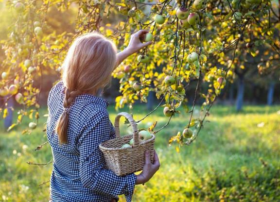 Woonveld boomgaard