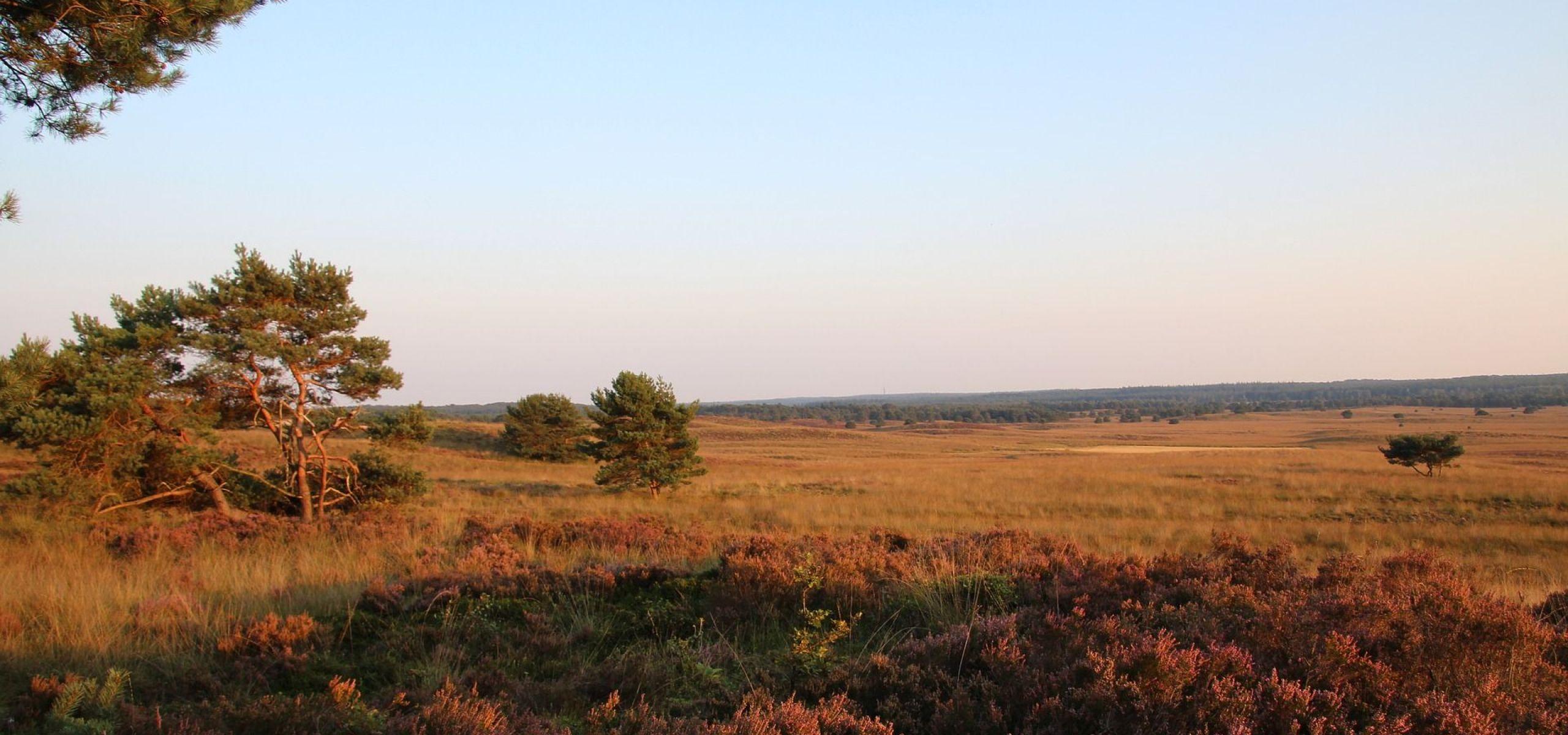 Landschap de Veluwe